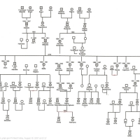 slatynscy-drzewo
