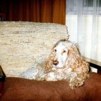 1991-bretek-a_0