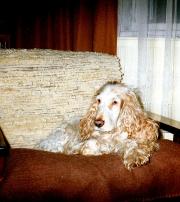 1991-bretek-a