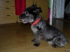 2010_04_09 po fryzjerze-szamti-10